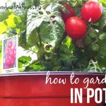 How to grow organic vegetables, fruits, & herbs in pots on your deck