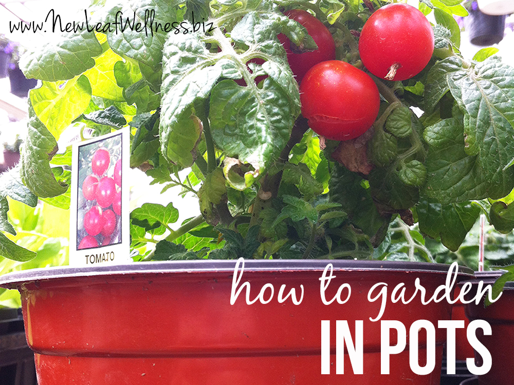 How to grow vegetables fruits herbs in pots new leaf for What vegetables to grow